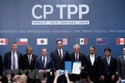 Hiệp định CPTPP: Làm gì để các doanh nghiệp 'nhỏ mà không yếu'