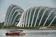 Singapore đón lượng du khách kỷ lục, bất chấp kinh tế khó khăn