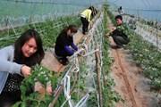 7 triệu lao động Trung Quốc ở nước ngoài về quê nhà khởi nghiệp