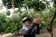 Tìm cơ hội cho hàng nông sản Việt Nam tại thị trường Nhật Bản