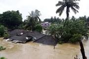 Ấn Độ: Gần 80 người thiệt mạng do mưa lũ tại bang Kerala