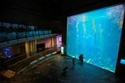 Khám phá Bảo tàng Hải dương và thủy cung lớn nhất Đài Loan