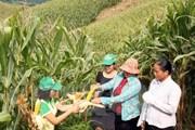 153 triệu USD giúp Việt Nam xóa đói giảm nghèo vùng nông thôn