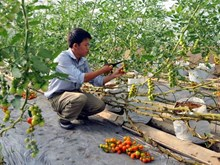 Thủ tướng yêu cầu gỡ vướng trong sản xuất nông nghiệp công nghệ cao
