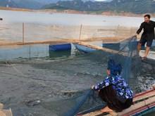 Sơn La đầu tư xây dựng, phát triển thương hiệu cá sông Đà