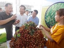 Lần đầu tiên Hải Dương tổ chức lễ hội vải thiều Thanh Hà
