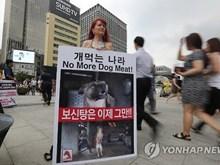 Người Hàn Quốc đang thay đổi dần thói quen ăn thịt chó