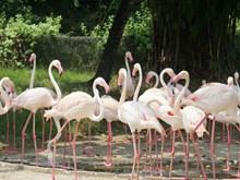 [Photo] Đến Đài Loan, đắm mình giữa bầy muông thú ở Wanpi World Safari