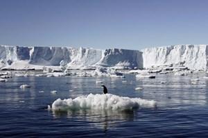Các tảng băng ở Bắc cực sẽ biến mất trong một vài năm nữa?