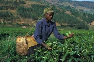 """2014 - một """"năm có nguy cơ cao"""" đối với châu Phi"""