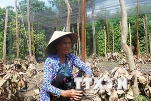 Việt Nam cần hơn 25.000 tỷ đồng để khắc phục thiệt hại do El Nino
