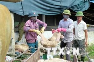 Cảnh báo nguy cơ phát sinh và lây lan dịch bệnh trên gia súc, gia cầm