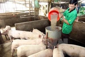 Nhập khẩu thức ăn gia súc và nguyên liệu tăng mạnh, đạt hơn 1,5 tỷ USD