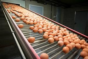 """Thêm một quốc gia châu Âu phát hiện sản phẩm """"trứng bẩn"""""""