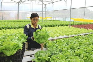 Phát triển nông nghiệp thông minh trong xu hướng cách mạng 4.0
