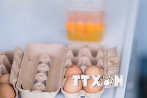 Hàn Quốc tiêu hủy toàn bộ trứng từ trang trại sử dụng thuốc trừ sâu