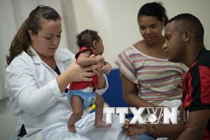 Các nước Mỹ Latinh thiệt hại tới 18 tỷ USD do virus Zika