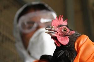 Trung Quốc phát hiện trường hợp nhiễm cúm gia cầm ở Vân Nam