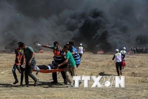 """Tổng thống Algeria gọi bạo lực ở Gaza là """"tội ác đê hèn"""""""