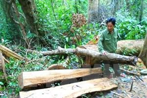 Bắt tạm giam đối tượng chủ mưu vụ phá rừng phòng hộ ở Bình Định
