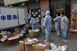 Trung Quốc: Dịch cúm gia cầm H7N9 giảm sau các biện pháp khẩn