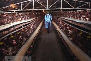 Triển khai ngăn chặn virus cúm A/H7N9 xâm nhiễm vào Việt Nam
