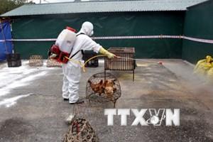 Nhiều chủng cúm gia cầm có nguy cơ xâm nhập vào Việt Nam