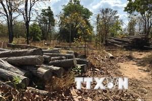 Thủ tướng yêu cầu ba tỉnh kiểm tra phản ánh việc chặt phá rừng