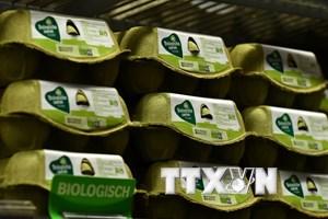 """Hà Lan tiến hành chất vấn các quan chức về bê bối trứng """"bẩn"""""""