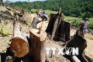 """Kiểm tra hiện trường 44ha rừng tự nhiên bị """"xóa sổ"""" tại Bình Định"""