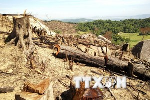 Vụ phá rừng tại Bình Định: Yêu cầu đình chỉ công tác cán bộ kiểm lâm