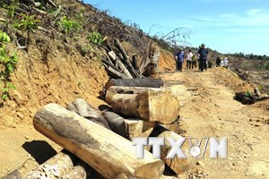 Vụ phá rừng quy mô lớn tại Bình Định: Kỷ luật một số cán bộ, kiểm lâm