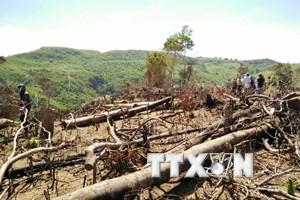 Bình Định: Thêm vụ phá rừng phòng hộ quy mô lớn để trồng keo lai