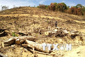 Bắt nghi phạm chủ mưu vụ phá 61ha rừng tự nhiên ở Bình Định