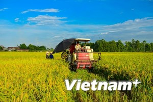 Ngành trồng trọt đặt mục tiêu xuất khẩu trên 21 tỷ USD năm 2018