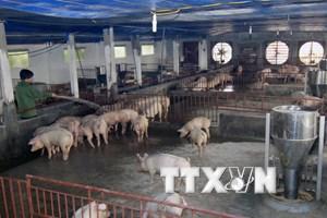 Đầu ra khó khăn, người chăn nuôi lỗ nặng trong 6 tháng đầu năm