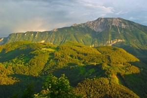 Hiện tượng các đỉnh núi châu Âu được phủ xanh ngày càng tăng