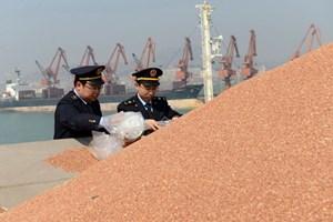 Trung Quốc hủy điều tra chống bán phá giá với lúa miến nhập khẩu từ Mỹ