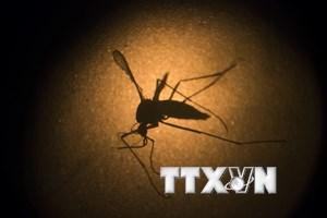 Trở về từ Bolivia, một người Hàn Quốc bị nhiễm virus Zika