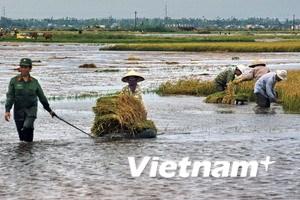 22 người chết, mất tích trong mưa lũ miền Trung