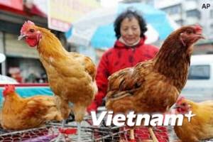 Có thêm hai trường hợp nhiễm H7N9 tại Trung Quốc