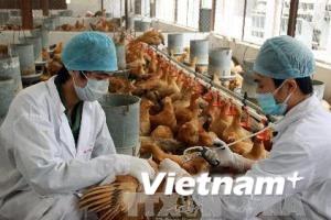 Công điện Chính phủ về phòng chống cúm gia cầm