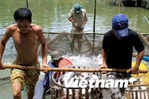 Hội Nghề cá VN yêu cầu WWF gỡ thông tin cá tra