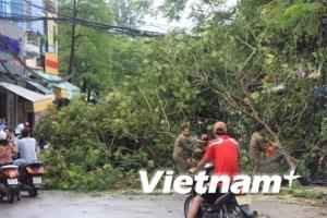 Dư chấn bão số 1 quật ngã nhiều cây lớn ở Hà Nội