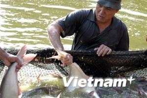 Đại diện WWF sẽ đến Việt Nam làm rõ về cá basa
