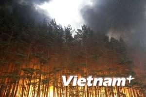 Nga: Số người thiệt mạng do cháy rừng tăng mạnh