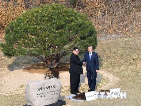 [Photo] Lãnh đạo hai miền Triều Tiên tham gia trồng cây lưu niệm