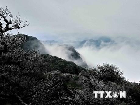 [Photo] Băng giá phủ trắng đỉnh núi Phia Oắc ở tỉnh Cao Bằng