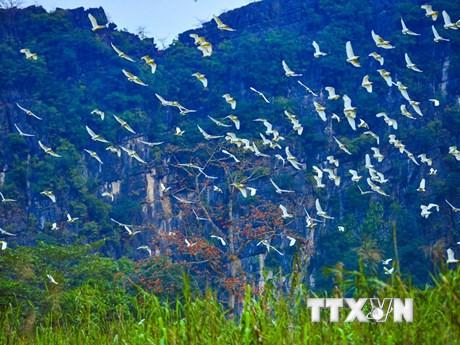 [Photo] Hòa mình vào thiên nhiên tại đảo cò Gia Lạc ở Ninh Bình