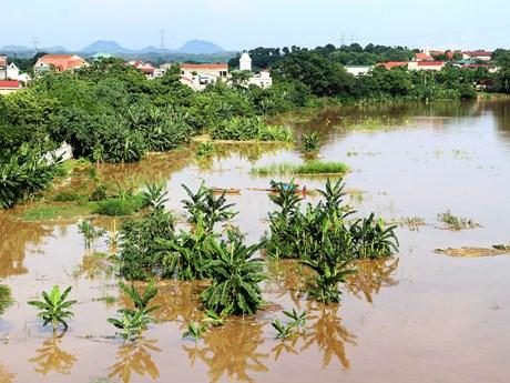 Phú Thọ: Nước sông Thao dâng cao, nhiều tuyến đê bao bị tràn